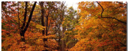 Autumn Wallpaper Theme With 10 Backgrounds