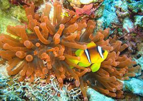 8 Custom Windows 7 Themes With Wildlife Desktop Wallpaper (Clown Fish, Parrots, Lions)
