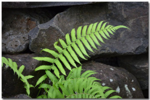 Fern Wallpaper Theme With 10 Backgrounds