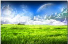 Field Wallpaper Theme With 10 Backgrounds