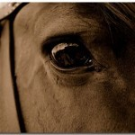 Windows 7 Horse Theme Featuring 10 Best Horse Wallpapers On DeviantArt