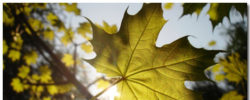 Leaf Wallpaper Theme With 10 Backgrounds