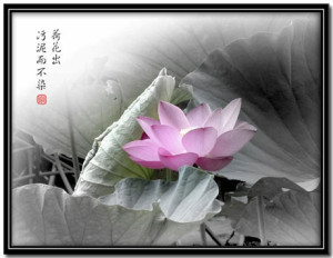 Lotus Wallpaper Theme With 10 Backgrounds