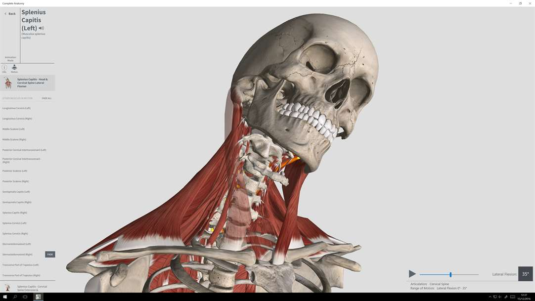 Vision The Skull & Muscles With Complete Anatomy On Windows 10