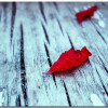 Petal Wallpaper Theme With 10 Backgrounds