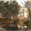 Pine Wallpaper Theme With 10 Backgrounds