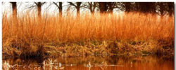 Reed Themepack With 10 Stunning Landscape Wallpapers