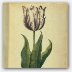 tulip mania vs bitcoin speculation bubble png