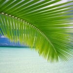 10-exotic-nature-wallpapers