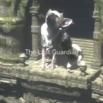the last guardian-wallpaper4