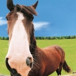 Animal_Horse_horse+wallpaper-horse-20