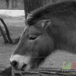 Animal_Horse_horse+wallpaper-horse-23