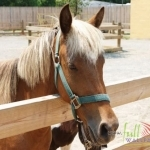 Animal_Horse_horse+wallpaper-horse-27