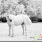 Animal_Horse_horse+wallpaper-horse-28