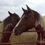 Animal_Horse_horse+wallpaper-horse-29