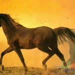 Animal_Horse_horse+wallpaper-horse-30