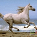 Animal_Horse_horse+wallpaper-horse-31